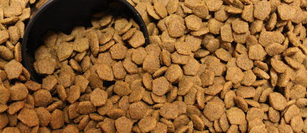 How to Choose the Best Pet Food