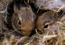 Top Tips for Shooting Rabbits